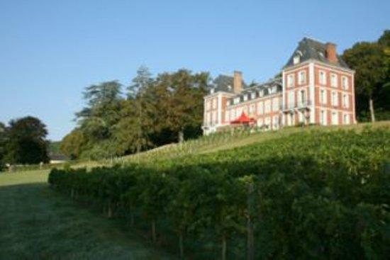 Chateau de Maubuisson: Une partie du vignoble