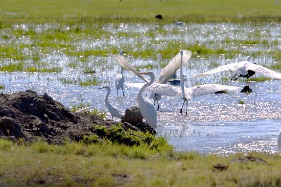Fallon, NV: Stillwater Bird watching