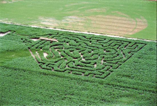 Fallon, NV: Corn Maze