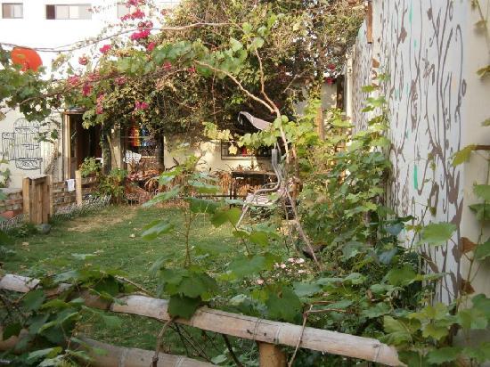 Funky Monkey Hostal : the garden