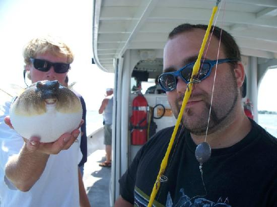Bay Bee Private Charters: Puffer Fish