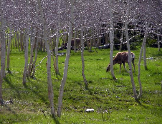 Great Basin National Park, NV: Deer