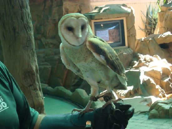 Owl In Training Picture Of Naples Zoo At Caribbean