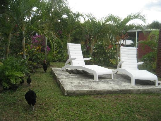 Dorothy's Muri Beach Bungalows: Private back yard with chickens