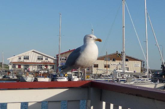 Southern Goteborg Archipelago: Little friend !