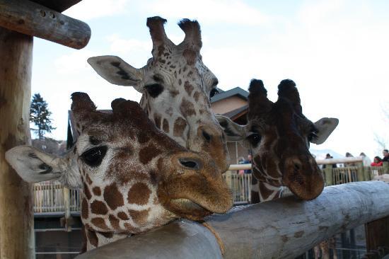 Cheyenne Mountain Zoo: Waiting to be feed.