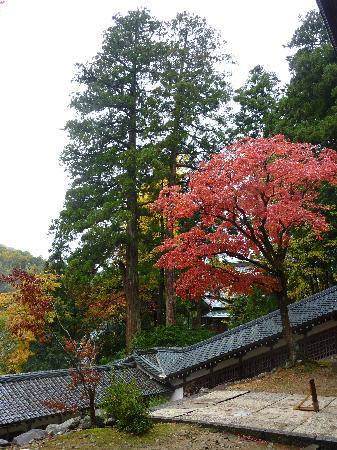 Eiheiji-cho, Japan: 紅葉が映えます