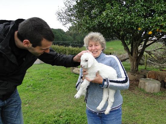 Waitomo Big Bird Bed & Breakfast: the baby goat