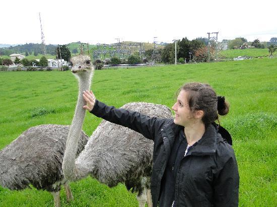 Waitomo Big Bird Bed & Breakfast: victoria the ostrich
