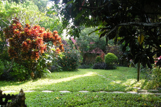 Maylyn Guest House: and the garden again
