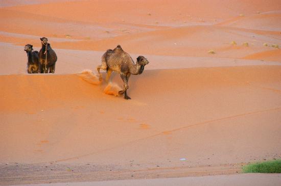 Marvelous Morocco Tours: In der Wüste von Marzouga 01