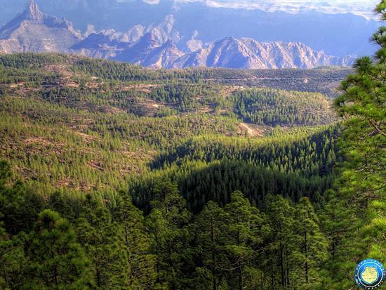 Парк натураль де тамадаба