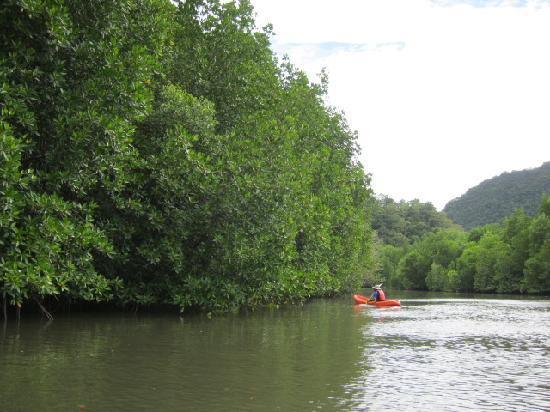 โฟร์ ซีซั่นส์ รีสอร์ท ลังกาวี มาเลเซีย: Mangrove kayaking