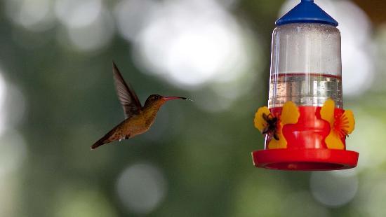 Delta Unplugged: hummingbird in the garden