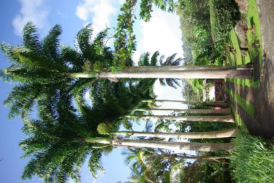 Le Jardin Malanga 사진