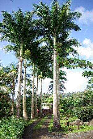 Le Jardin Malanga: Allée principale vers réception