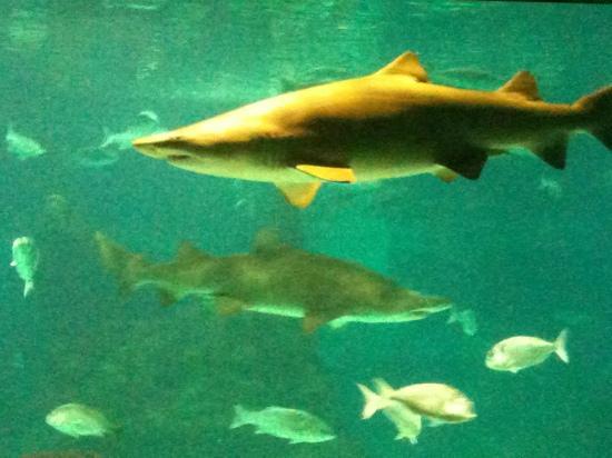 Hotel Cortes: squali