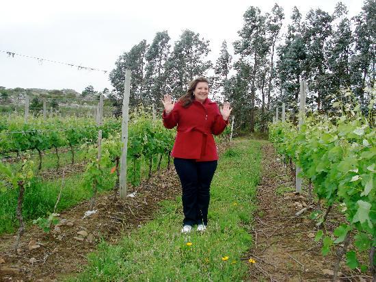 Punta del Este, Uruguay: The Gourmet Wine Experience