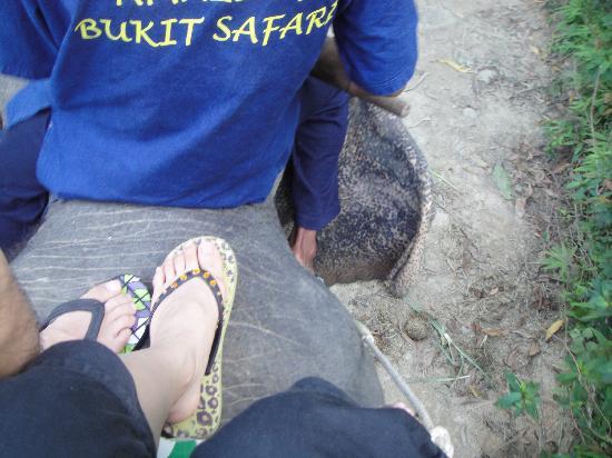 Blue Island - Day Tours: 象に乗って足元を映しました。