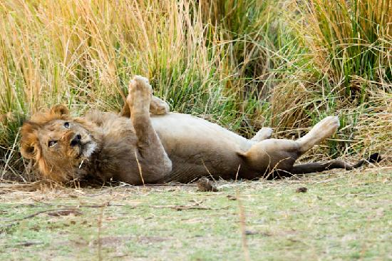 Mana Pools National Park, Zimbabwe: Break Time