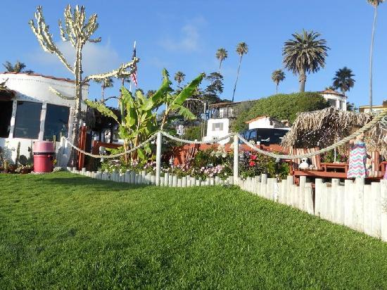 Beachcomber Inn: the grounds around the motel
