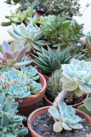 Outeniqua Travel Lodge: Succulent collection