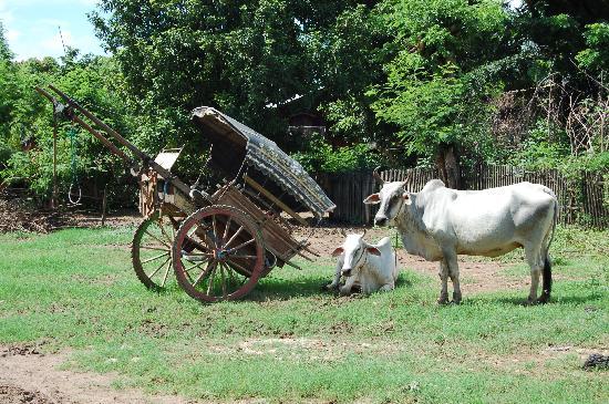 Amarapura, Burma: CARROS