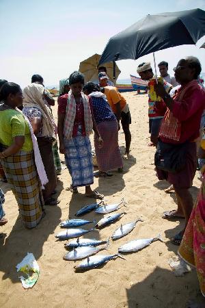 Palmleaves Beach Resort : Fish auction