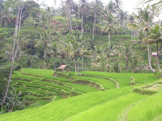 バリ島: 画像