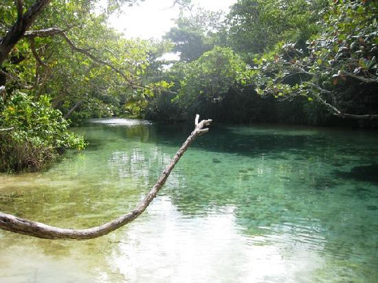 Frenchman's Cove: der einmündende Bach