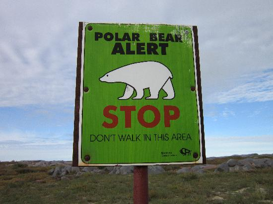 Up the Creek Bed and Breakfast: Warning sign on the tundra-polar bear warning