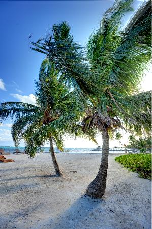 Grand Caribe Belize Resort and Condominiums: Grand Caribe Palm Trees