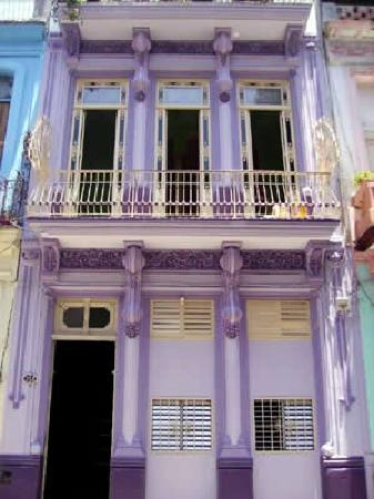 The Purple House: The frond of the house.