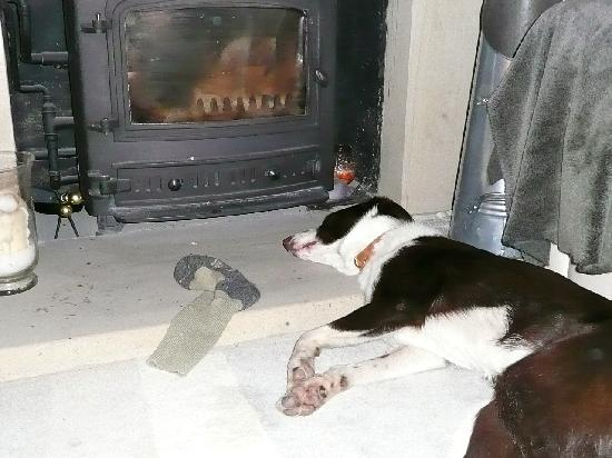 The Willows Bed & Breakfast: You may have to push Moss out of the way of log burning stove!