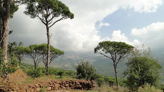 Deir El Harf, เลบานอน: Pineland3