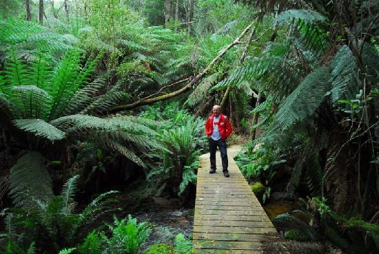 Cuckoo Falls : Crossing one of the bridges