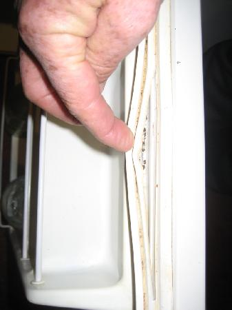 Fountain Court Motor Inn: mould on fridge door seals