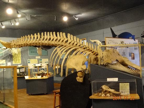 The Whale Museum 2