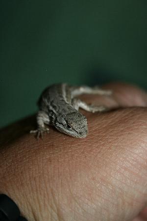 Earthship Biotecture: Fun creatures