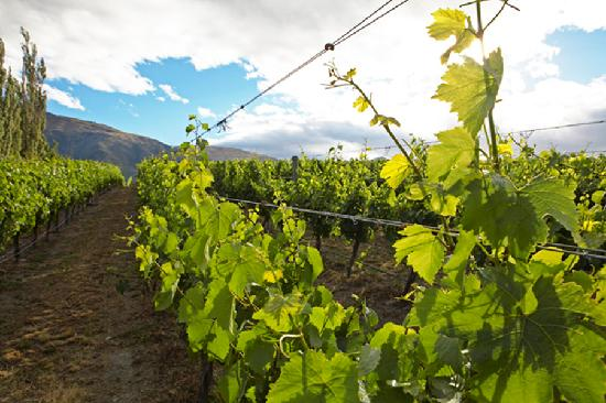 Queenstown Heritage Tours Wine & Culture Tour: Learn where the wine is coming from