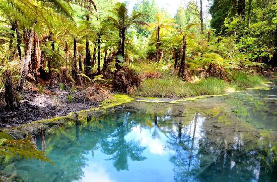 Redwoods, Whakarewarewa Forest: Lush forest floor