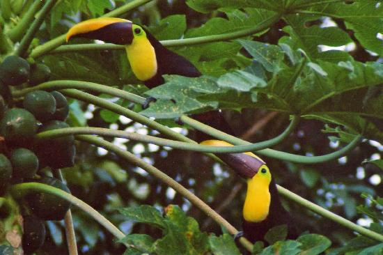 Giardini di Papagayo Hotel: Toucans at the hot springs bath