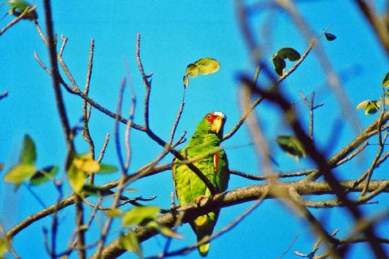 Giardini di Papagayo Hotel: Parrots flew over me while laying on the beach