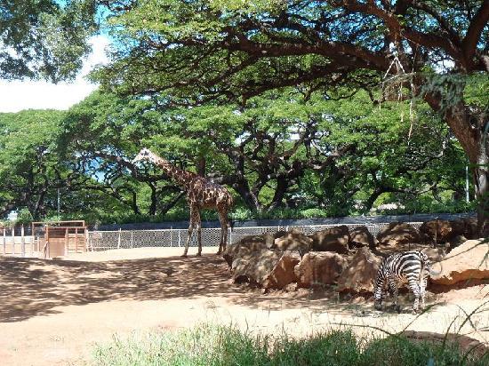 Honolulu Zoo: 開放的な園内で見る為か日本(地元)の動物園で見るより全体的に動物が大きく見えました。気のせいか…??