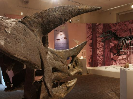 Musee Vert : L'expo Dinosaures