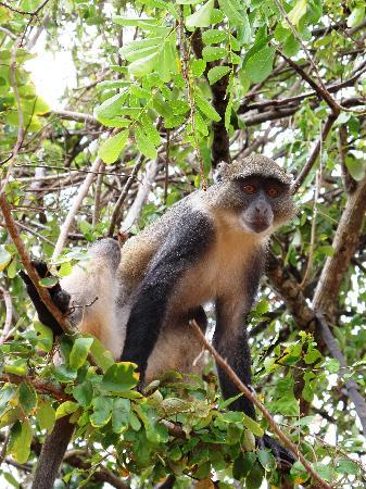 Garoda Resort: scimmietta fuori dall'hotel