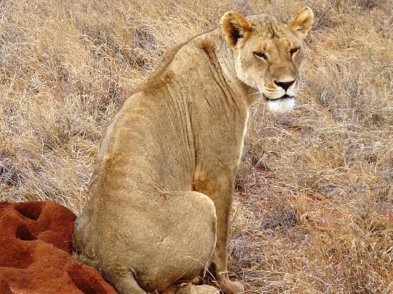 Garoda Resort: safari: leone