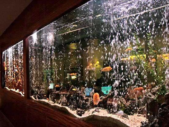 Hotel Grand Side : Aquarium an der Rezeption