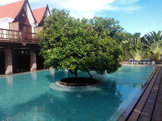 Mango hill swimming pool picture of mango hill pondicherry tripadvisor for Best hotels in pondicherry with swimming pool