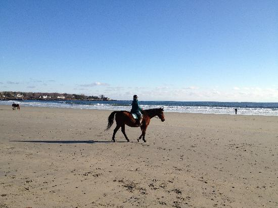 Gooch's Beach: Even horses are allowed
